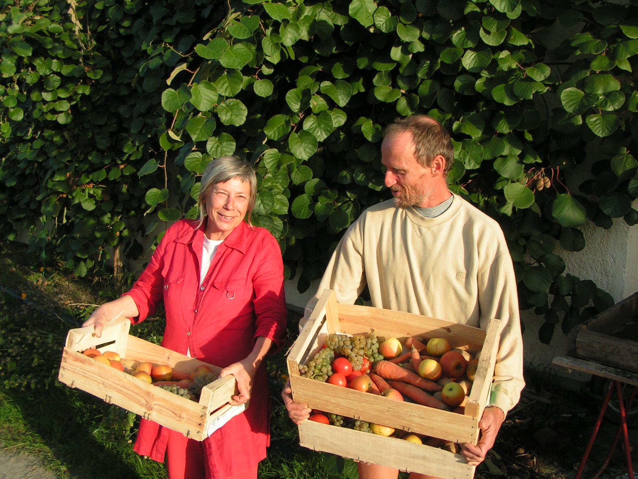 Cueillette et ramassage des légumes et fruits