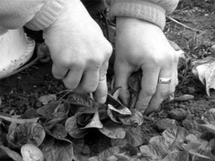 Point de dépôt de paniers biologiques à La Source (45)